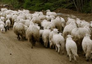 Creşterea economică a României nu e sustenabilă